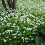 Four Flowering Ground Cover Choices