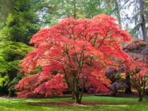 Top Landscaping Trees for All Seasons